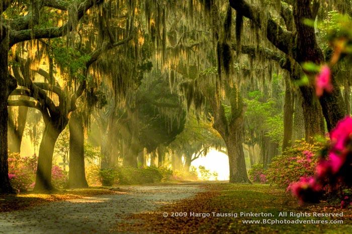 Photo of sunlight streaming through trees in Savannah, Verdana by Margo Taussig Pinkerton