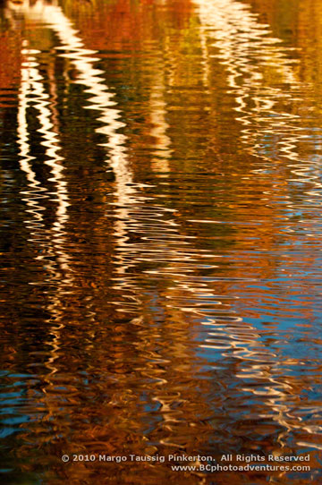 Autumn tree reflection in New Hampshire by Margo Taussig Pinkerton.