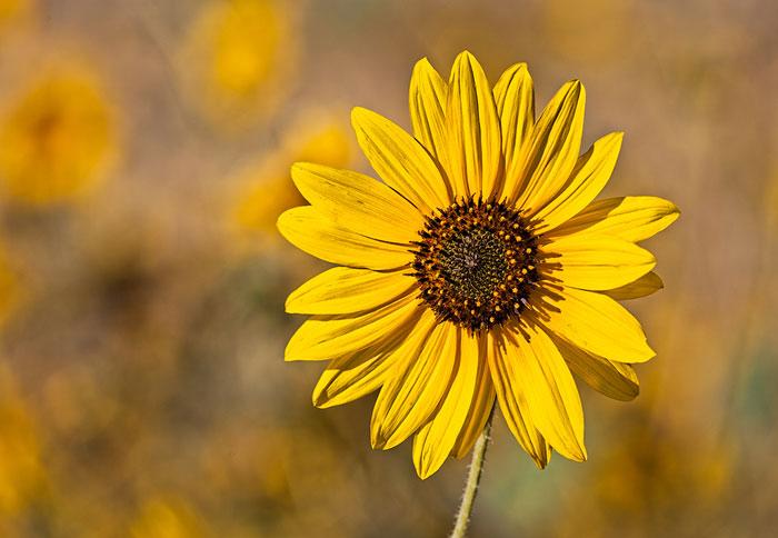 How to photograph flowers part 2 equipment apogee photo magazine mightylinksfo