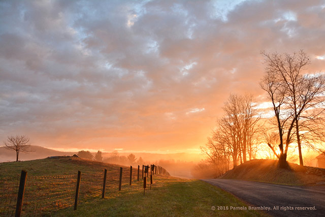 Image of fence, road, trees, and mist during the golden light of sunrise by Pamela Brumbley.