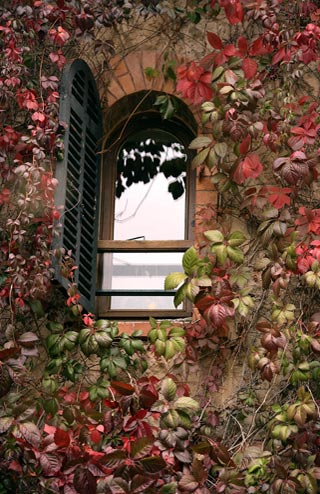 Photo of vines around a window in Paris by Andy Long