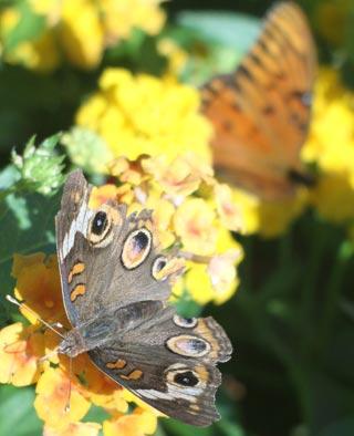Photo of butterflies by Jim Austin
