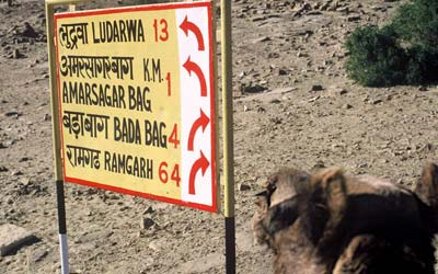 Photo of camel and mileage sign near Rajasthanr, India by Ron Veto