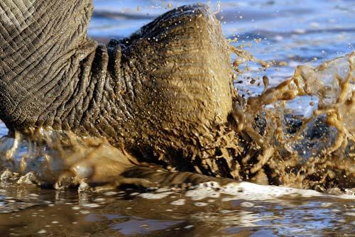 Close-up hoto of elephant's foot Savuti Camp, Linyanti Reserve, Botswana by Michael Polliza