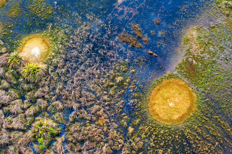 Aerial photo of Red Lechwe in Okavango Delta, Botswana by Michael Poliza