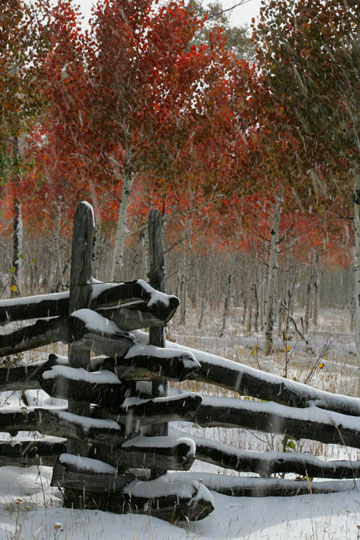 Photo of split-rail fence in snow with colorful Aspen trees by Andy Long