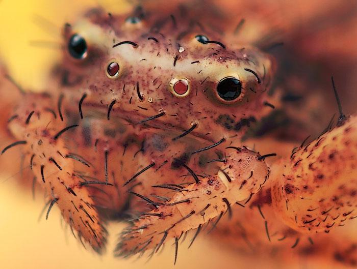 Microphoto of Crab Spider by Huub de Waard.