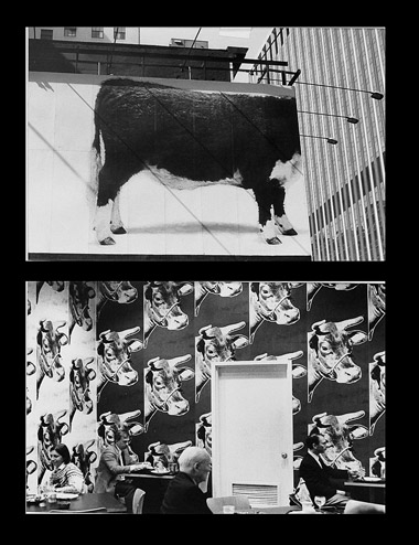 Photo diptych of cow with head in building and Andy Warhol mural of cows by Ned Harris.