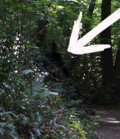 "Questionable photo of ""Bigfoot"" on Olympic Peninsula, Washington by Michael Leggero"