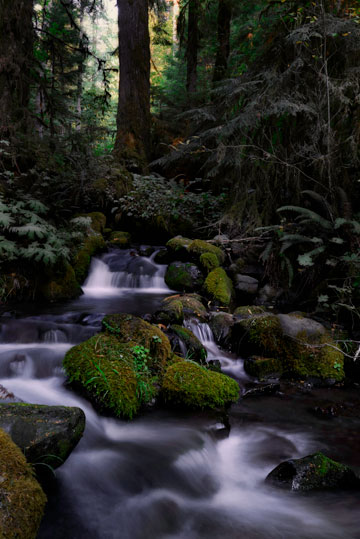 Waterfall photo at Wiskey Bend Trail, Olympic National Park, Washington by Michael Leggero