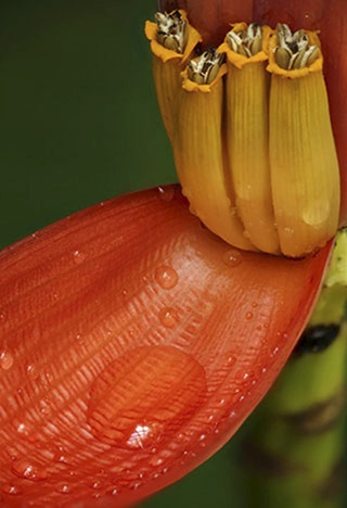 Close-up photo of the red petal of a flower with rain drops by Andy Long.