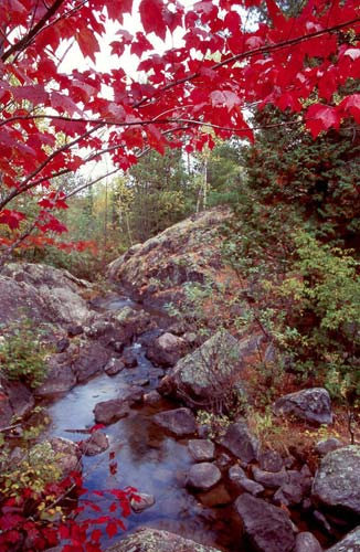 Photo of red Maple trees & stream during Autumn by Andy Long
