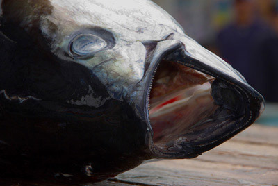 Photo of Photo of tuna at Eisa Festival in Okinawa, Japan by Michael Lynch