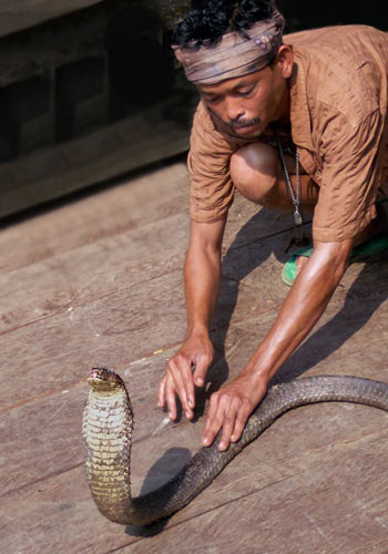 Photo of man with snake in Chiangmai, Thailand by Ron Veto