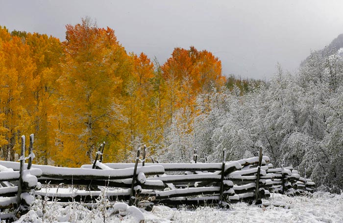 Photo of splitrail fence and Aspen trees near Telluride, Colorado by Andy Long