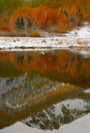 Reflection mountain photo of Aspen trees in snow near Telluride, Colorado by Andy Long