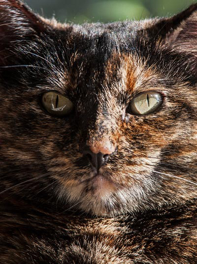 Close-up image of a cat by Noella Ballenger