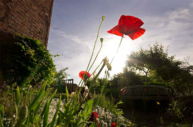 Garden photo tips: photo showing the environment of a garden with a red flower reaching to the sky by Edwin Brosens.