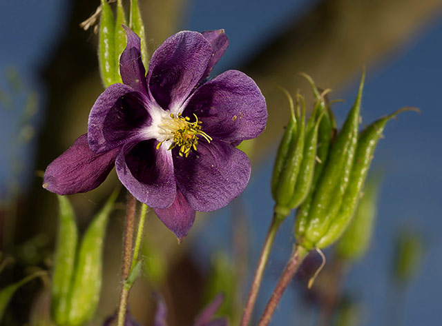 Garden photo tips: close-up of purple flower by Edwin Brosens.