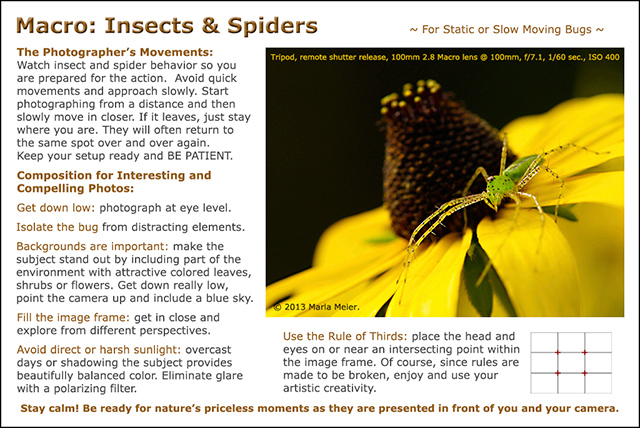 Green Lynx spider on cone flower: macro insects and spiders photography tips by Juergen Roth and Marla Meier.