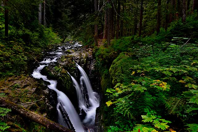Waterfall in the forest at Olympic National Park, Washington by Michael Leggero.