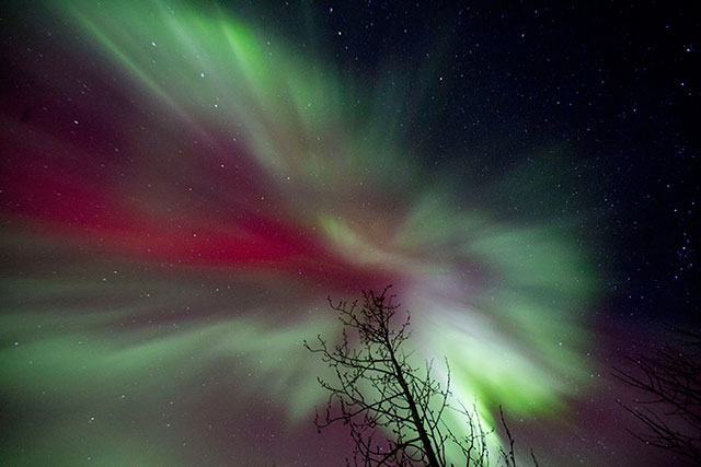 Properly exposed image of the Aurora Borealis - titled Aurora Butterfly by Andy Long.