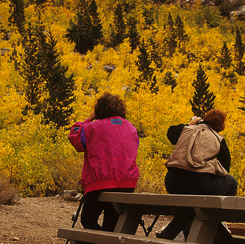 Photography participants making images of the fall colors by Noella Ballenger.