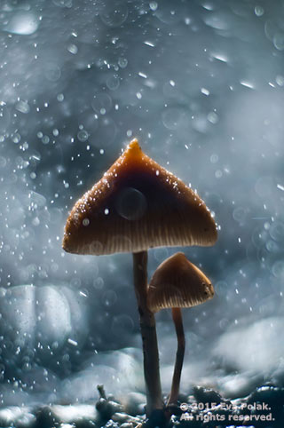Image of mushrooms in rain showing size contrast by Eva Polak.