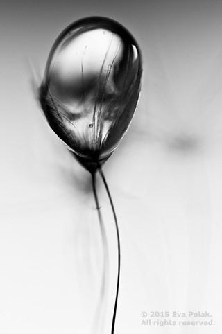 Black and white image if water drop showing tonal contrast by Eva Polak.
