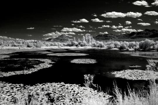 Infrared photo of lily pads at Revelstoke National Park by Noella Ballenger