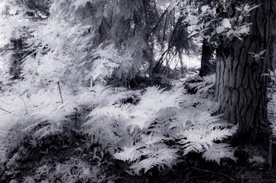 Infrared photo of forest floor by Noella Ballenger