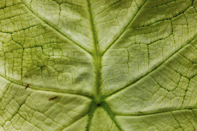 Macro photo of details of a green leaf by Brad Sharp.