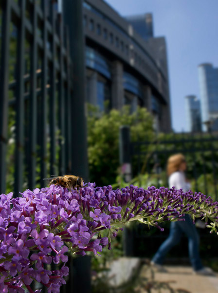 Photo of wildflowers and a fly in the city of Brussels by Edwin Brosens