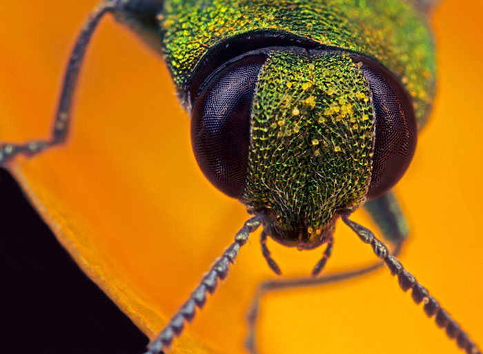 Microphoto of the head of a small beetle by Huub de Waard.