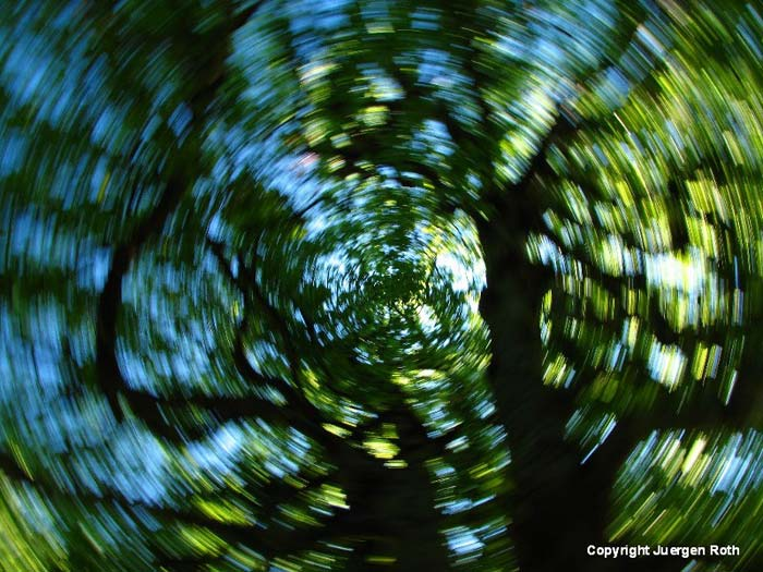 Intentional rotating camera movement makes a swirling carousel of a green springl tree by Juergen Roth.