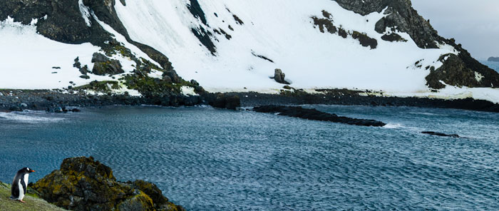 Photo of little Gentoo Penguin looking out over water and mountains in Antarctica by Michael Leggero.