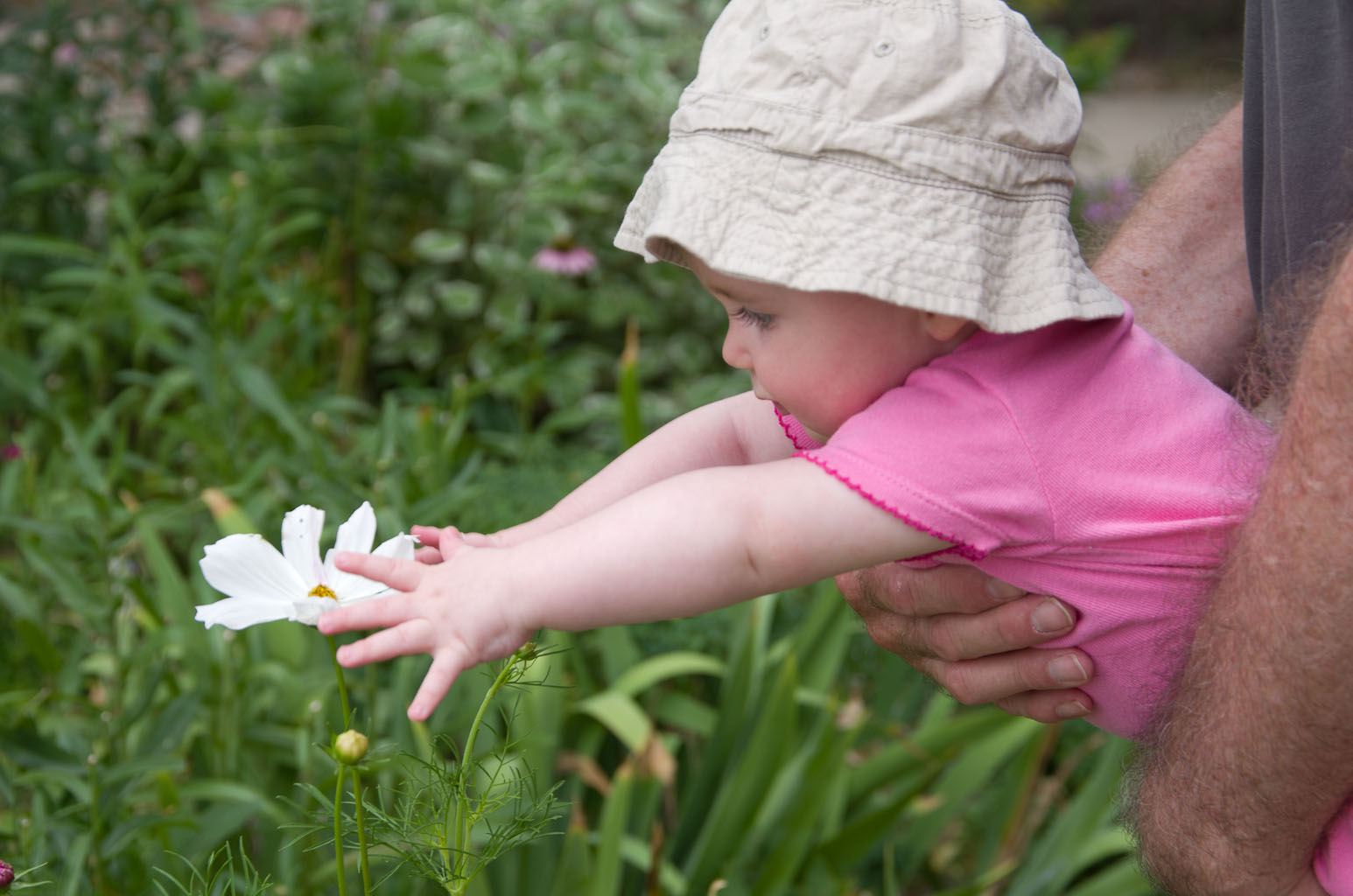 Photo of Baby A grabbing for a white Daisy by Elizabeth Powis Fulks.