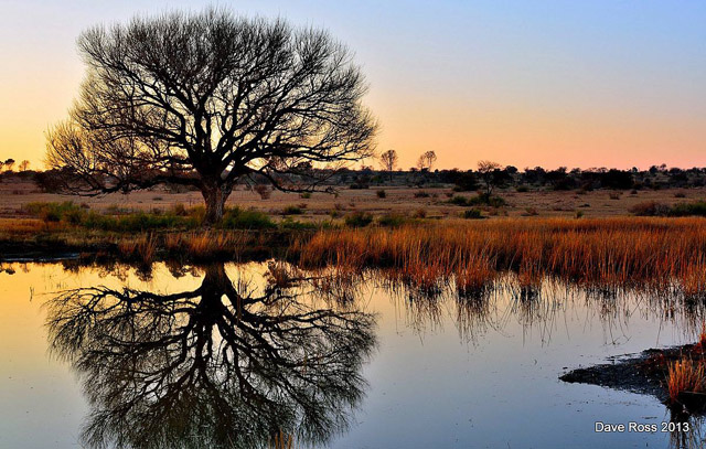 Silhouette and reflectionof tree on pond made during the 'golden hour' of pre-down in Kroonstad, South Africa by Dave Ross.