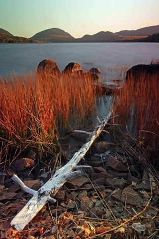 Photo guide to Acadia National Park: Maine fall foliage and fallen tree at edge of Eagle Lake by Juergen Roth.