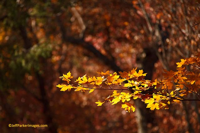 Fall Photography Ideas 7 Useful Fall Photography Tips Apogee