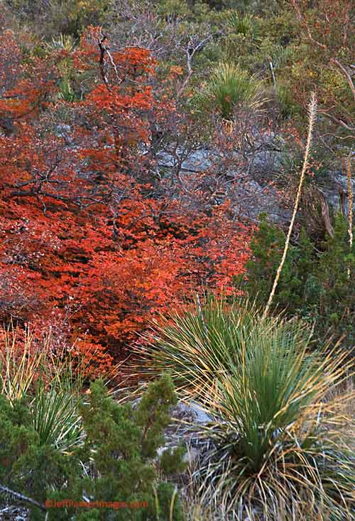 Fall photo: orange, rust and red leaves on brush by Jeff Parker.