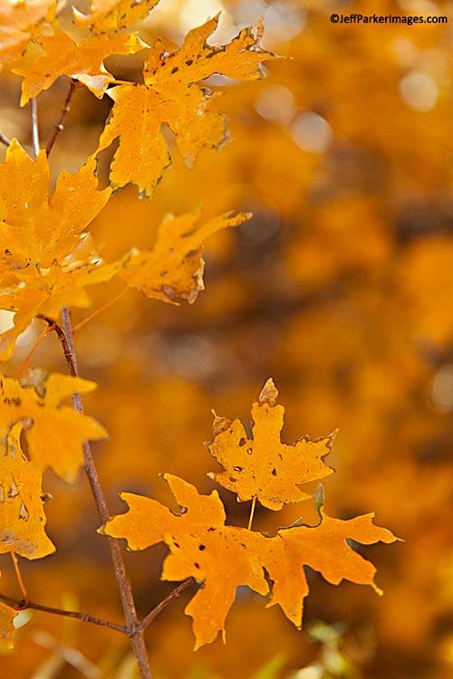 Fall photos: orange leaves against a blurred orange leaf background by Jeff Parker.