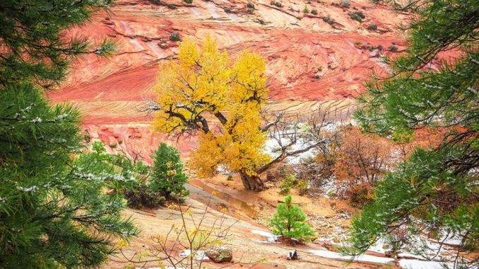 Winter Window: Zion National Park