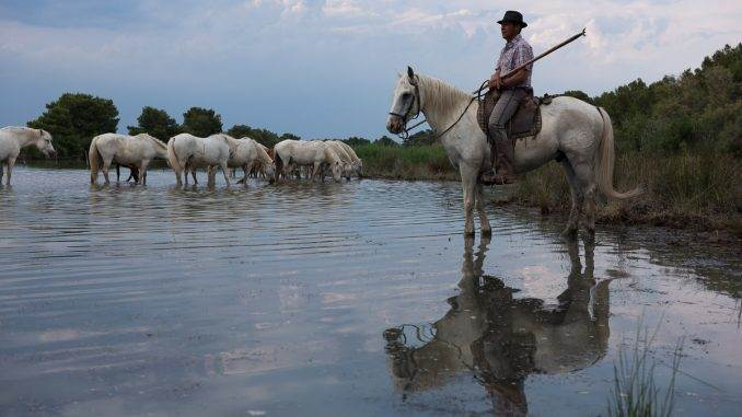 a Gardian in southern France watching over his team of horses in a Camargue marsh with a range of textures and tones.