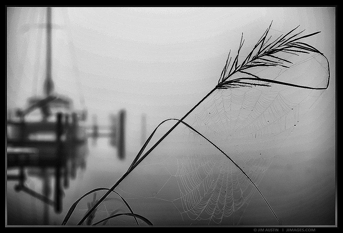 Spider Web Dock Reed North Carolina Jim Austin Jimages
