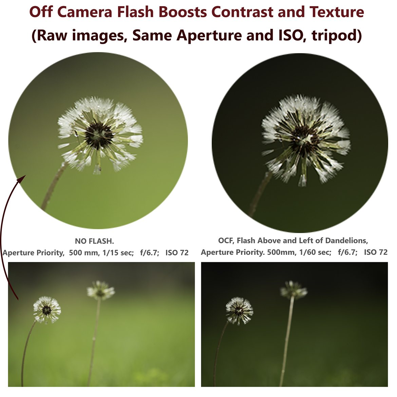 No Flash VS OCF Dandelion Contrast Texture