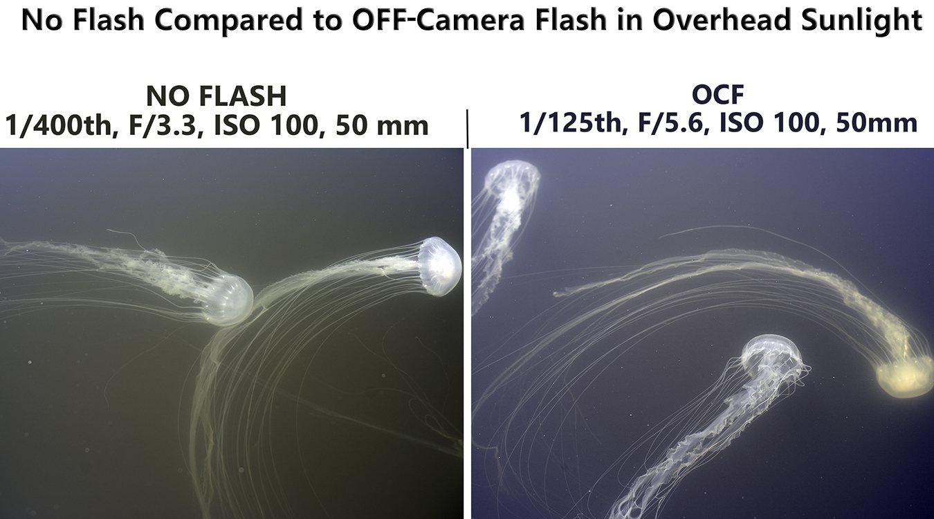 OCF Overhead Sunlight