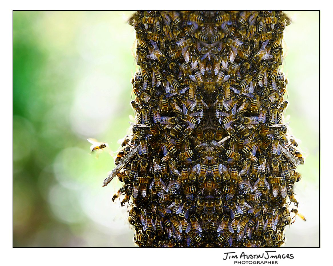 Bee Jim Austin Jimagesdotcom