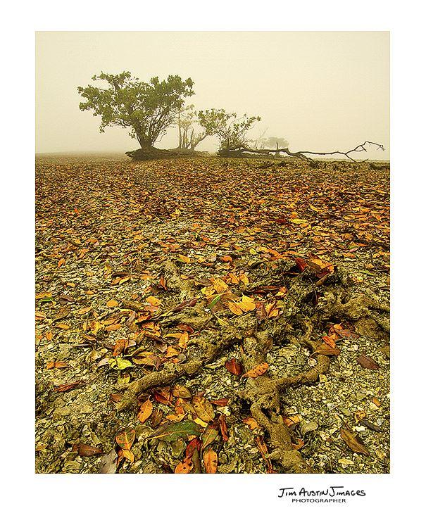 Fall Broad River Everglades Jim Austin Jimages