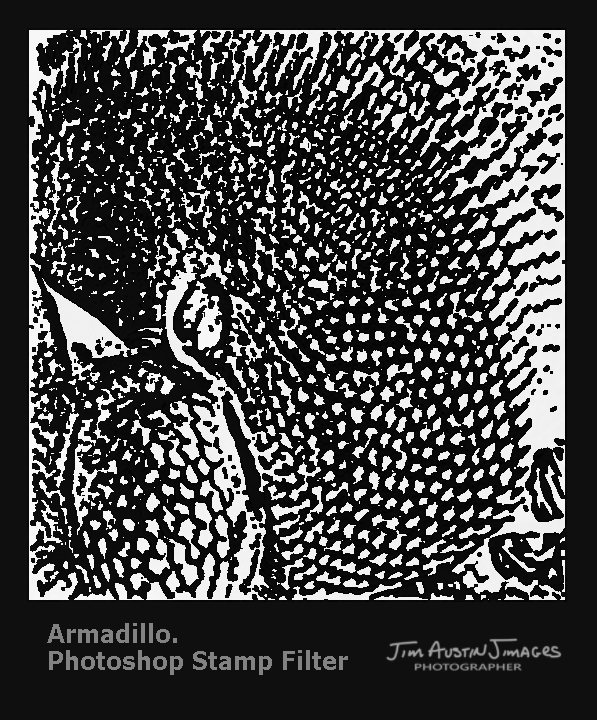 Armadillo Photoshop Stamp Jim Austin Jimages